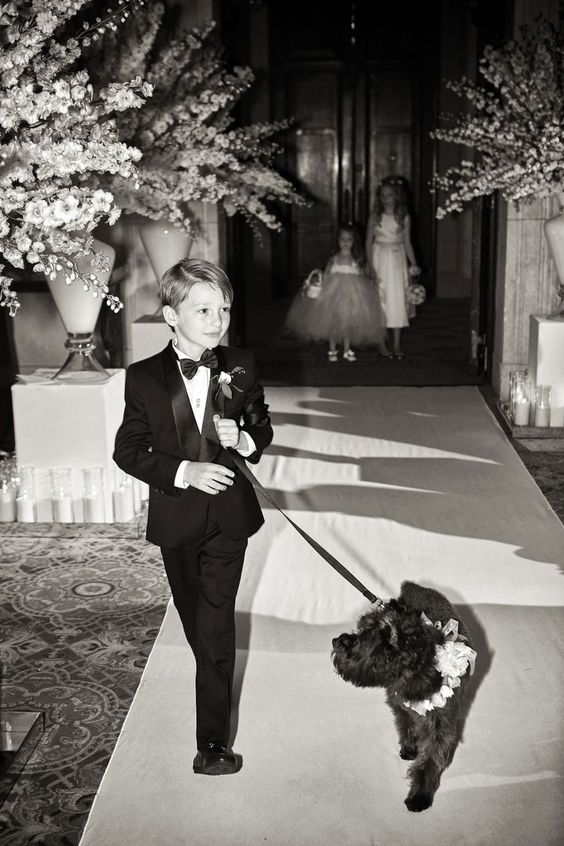 ring-bearer-dog-wedding