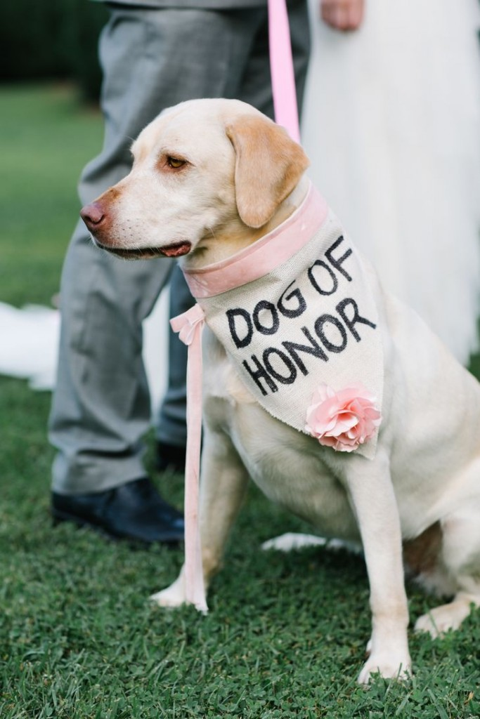 dogs-wedding-honor