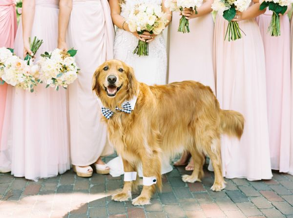 wedding-dog