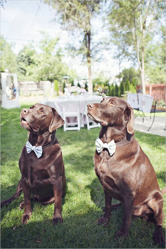 dogs-bowtie-wedding